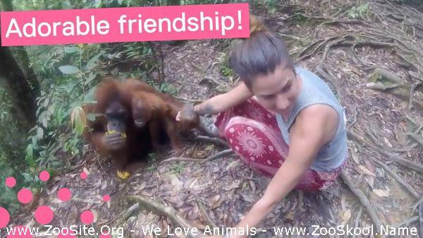 191909396 0102 fun orangutan grabs hold of girl and wont let go - Orangutan Grabs Hold Of Girl And Won't Let Go
