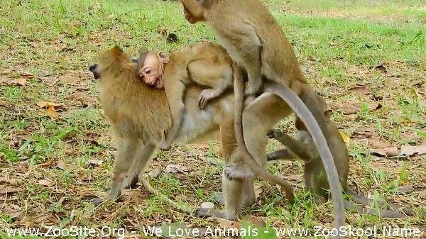 191909820 0117 fun monkey block milk to a baby but monkey man wanna sex - Monkey Block Milk To A Baby But Monkey Man Wanna Sex