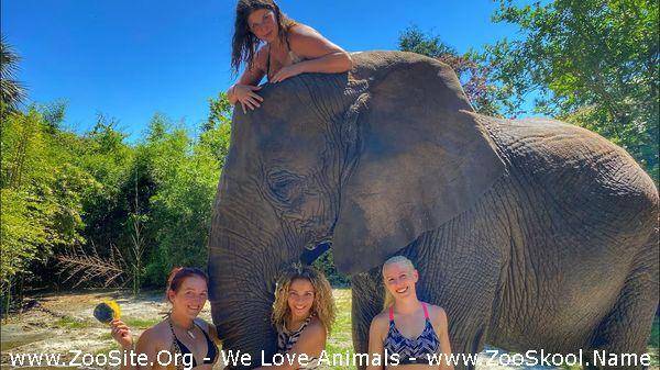 191909930 0132 fun ladies wash a 9000lb elephant  - Ladies Wash A 9,000lb Elephant !