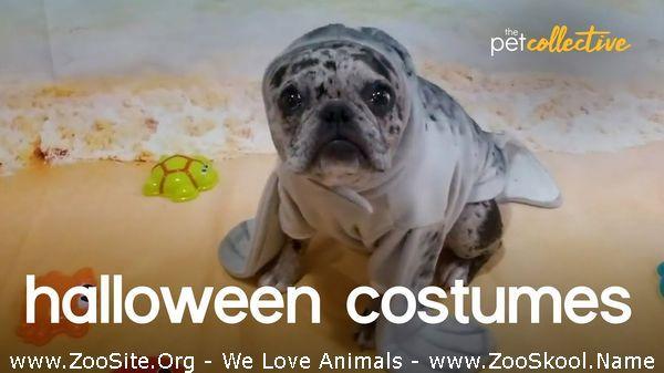 191910061 0148 fun halloween pet costume party - Halloween Pet Costume Party